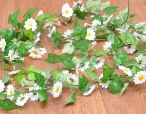 daisy-vine
